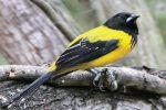 World Birding Center Sites in South Texas
