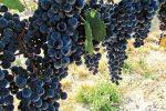 Wineries in Hermiston