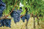 Wineries near Santa Clara Valley