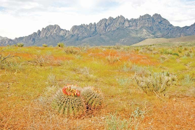 Things to Do in Las Cruces